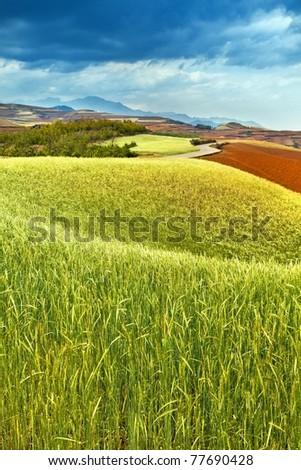 Fields - stock photo