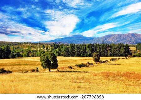 Fields after harvesting. On a roadside avenue of green trees. On the horizon in a haze mountains are seen - stock photo