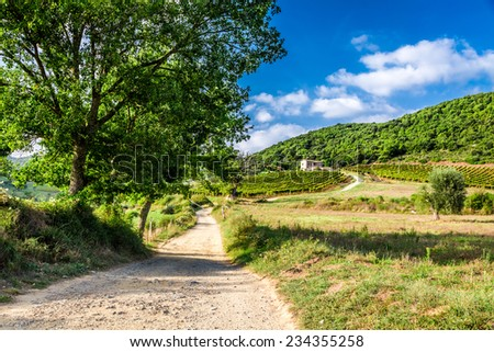 Fields and vineyards in the countryside, Tuscany - stock photo