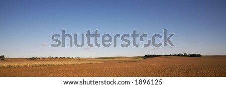 Fields Close to Harvest - stock photo