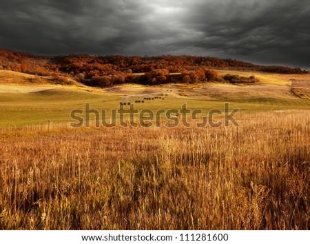 fields in fall season - stock photo