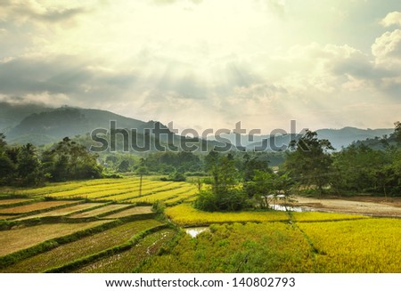 Fields in Laos