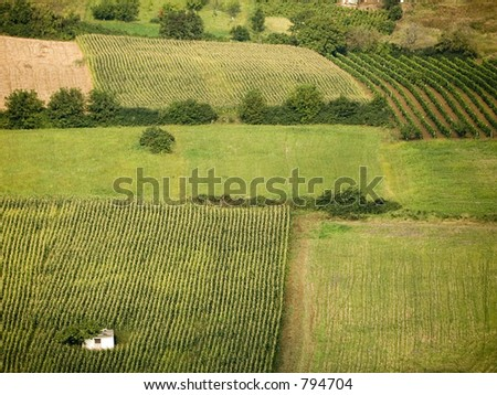 Fields of cereals and vineyards at Fruska Gora in Vojvodina - Serbia
