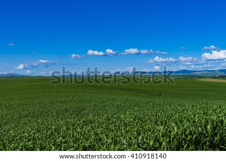 Fields of corn in the Palouse region of Washington state - stock photo