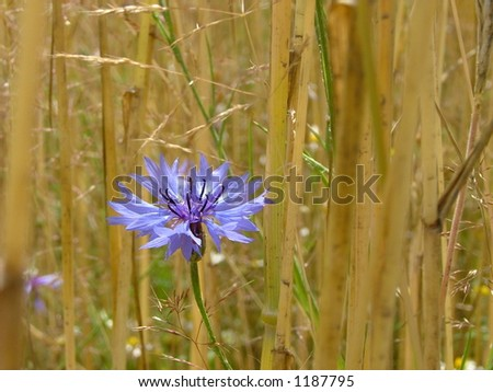 fields of countryside - stock photo