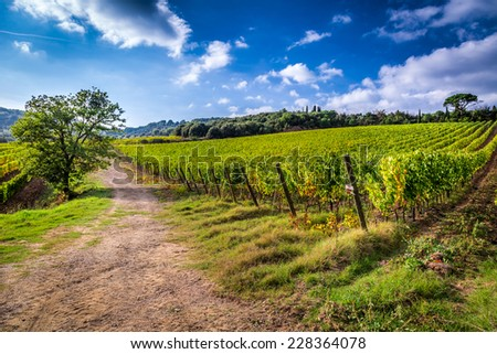Fields of grapes in Italy - stock photo