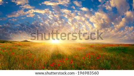 Fields of poppies at sunrise - stock photo