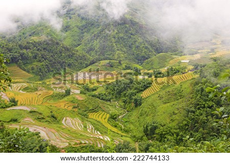 Fields of rice constructed in terraces,Sapa.Vietnam