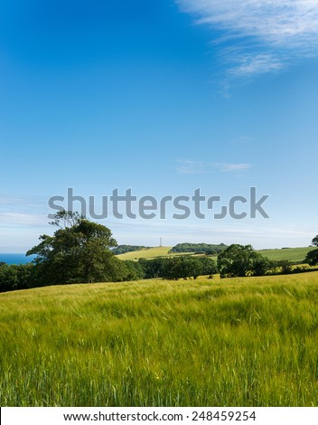 Fields of summer barley with the Gribbin Head daymark in the far distance - stock photo