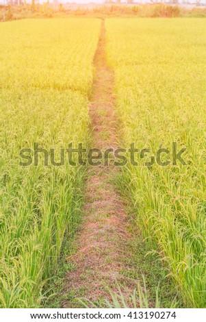 Fields of Sunlight Summer Lawn - stock photo