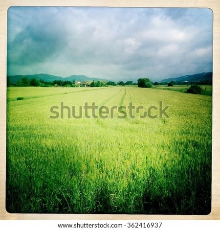 Fields of wheat in the countryside of Solomeo, Umbria, Italy