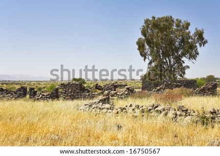Fields with a yellow dry grass and a tree on a background of the pale cloudy sky - stock photo
