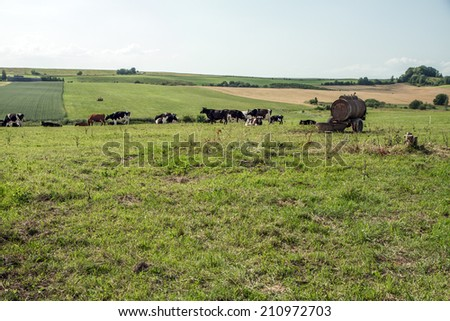 Fields with animals