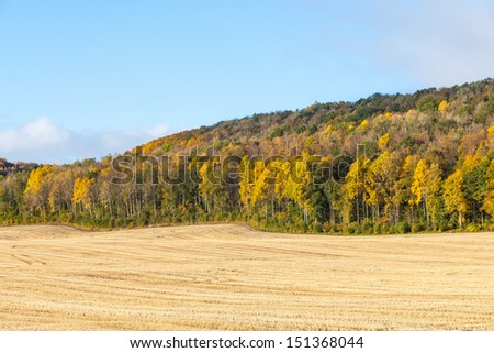 Fields with forest in autumn colors - stock photo