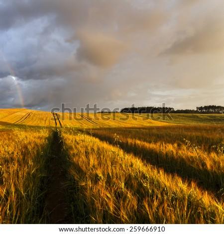 Fields with rainbow in northern Poland. Pomerania province/Rainbow field - stock photo