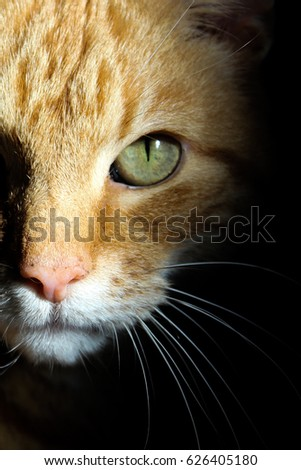 White Cat S Whiskers Stock Images Royalty Free Images
