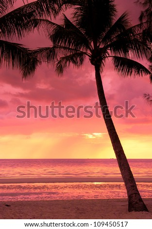 Fiery Backdrop Coconut Horizon