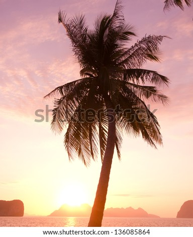Fiery Backdrop Palm Paradise