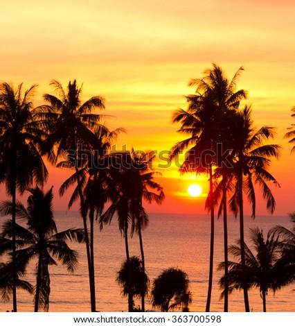Fiery Backdrop Palm Paradise  - stock photo