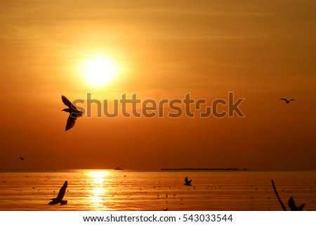 Fiery orange sunset  Dramatic golden sky at the sunset  background with Seagulls flying over the sea