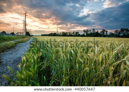 fiery sunset over a field of corn with electrical pylons on the horizon