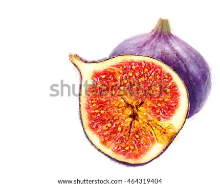 Fig fresh fruit closeup isolated on white background. Watercolor illustration on white background.