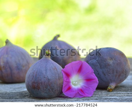 Fig fruits and a beautiful flower - stock photo