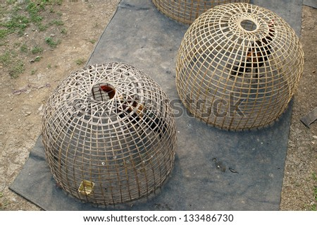 fighting cock in bamboo cage. - stock photo