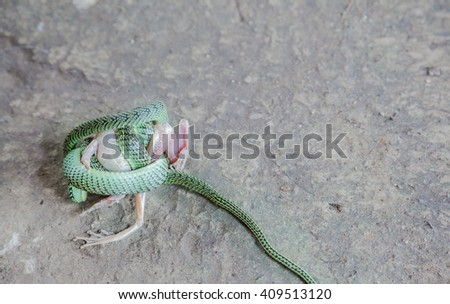 Fighting snake and frog - stock photo
