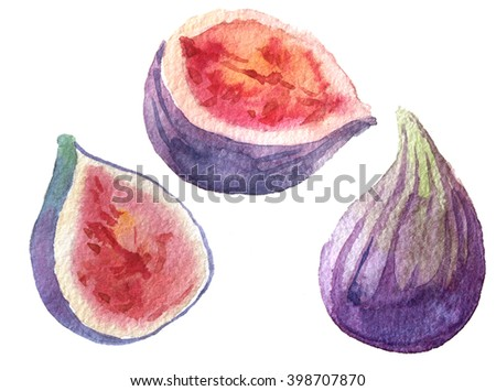figs watercolor set - stock photo