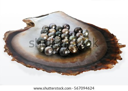 Fiji Black lip oyster shell with selection of black pearls. Studio shot isolated on white background.