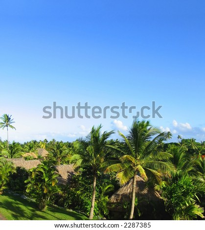 Fijian view. Green palms agains the blue sky.