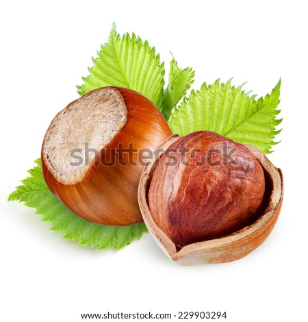 Filberts with leaves isolated on a white background. - stock photo