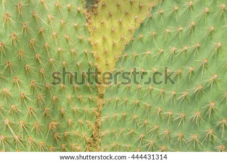 Filled full frame picture. Cactus surface with different colors. Cactus Texture natural background. Flat leaves of green and yellow cactus with needles pattern. Textured natural backdrop. - stock photo