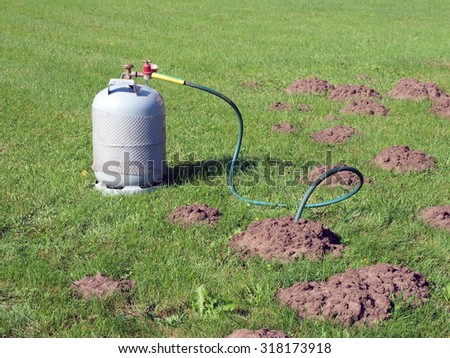 Filling mole hills with toxic gas from gas cylinder to kill them.