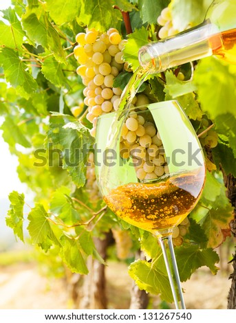 Filling the glass with white wine from the bottle with vineyard with grapes on background