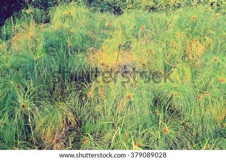 film tone shiny grassland, green field, film style hipster wallpaper