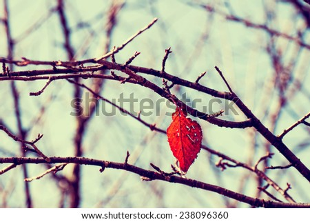 Filtered image : a red leaf on the branch in autumn with instagram effect to look vintage and retro. - stock photo