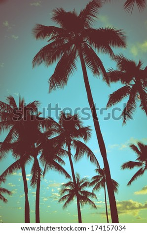 Filtered Vintage Retro Styled Palm Trees In Hawaii - stock photo
