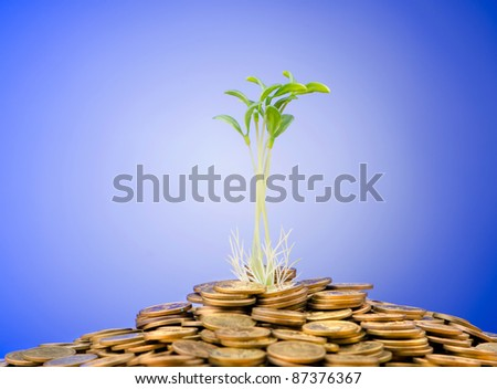 Financial concept with seedlings and coins - stock photo