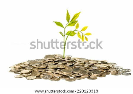 Financial Growth, tree on pile coins isolated on white background - stock photo