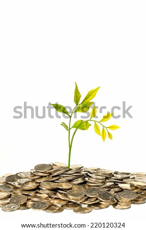 Financial Growth, tree on pile coins isolated on white background