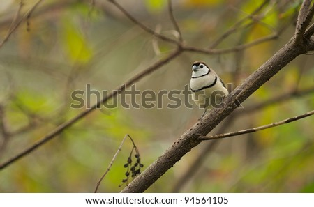 Finch Like Bird Perched on a tree branch - stock photo