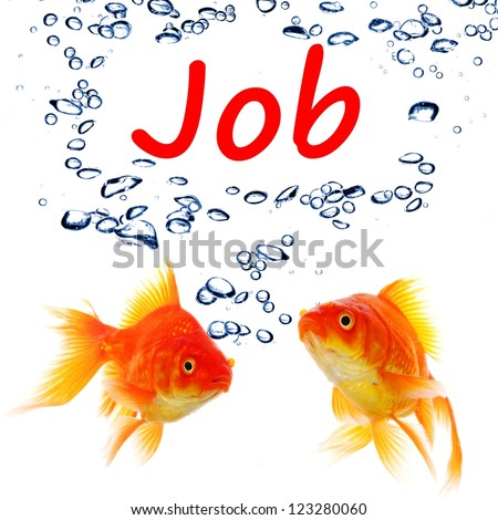 find a job concept with goldfish on white background - stock photo
