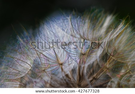 fine art macro dandelion colorful light - stock photo
