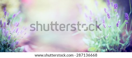 Fine lavender flowers plant and blooming on blurred nature background , banner for website - stock photo