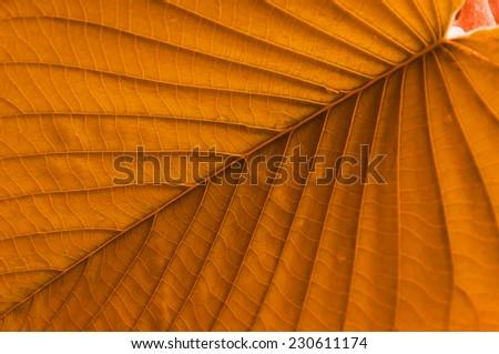 fine leaf texture in orange color - stock photo
