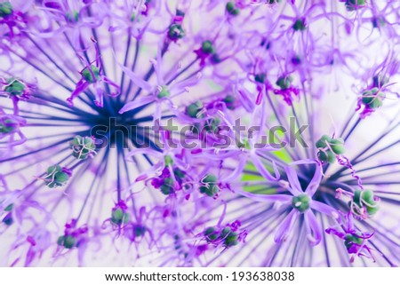Fine violet flowers - stock photo
