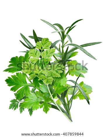 Fines herbes, a combination of Parsley,Chervil, Tarragon. French cuisine. Clipping path, infinite depth of field