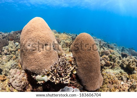 Fingers of coral on a shallow, tropical coral reef with sunrays - stock photo